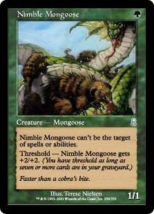 Nimble Mongoose